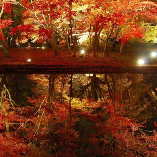 2曽木公園ライトアップ (2)