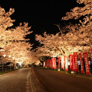 寺河戸町|約500メートル続く、薄紅色の桜散歩道。|さくらさくらのさんぽみち