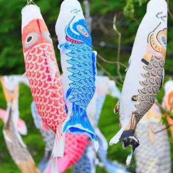 明世町 市民から寄付された約160匹の鯉が空を泳ぎます 瑞浪市こいのぼり祭り