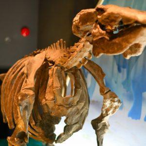 明世町|太古の恐竜、生物の化石がたくさん展示|瑞浪市化石博物館